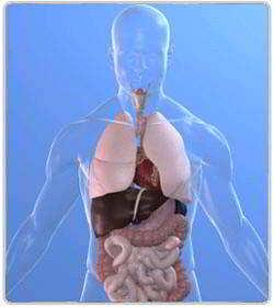 Aloe Vera en digestion